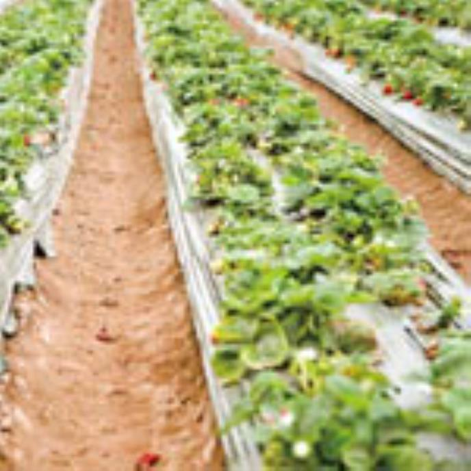 Cameras and RFID Produce Better Harvest