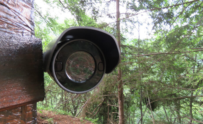 Wisenet provides opportunities to observe wildlife through live videos