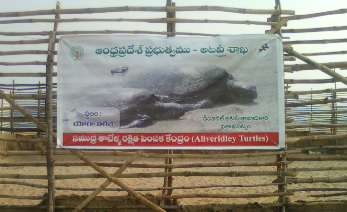 Smart Chip partners with WWF-India for the conservation of olive ridley turtles in the Odisha Coast, India