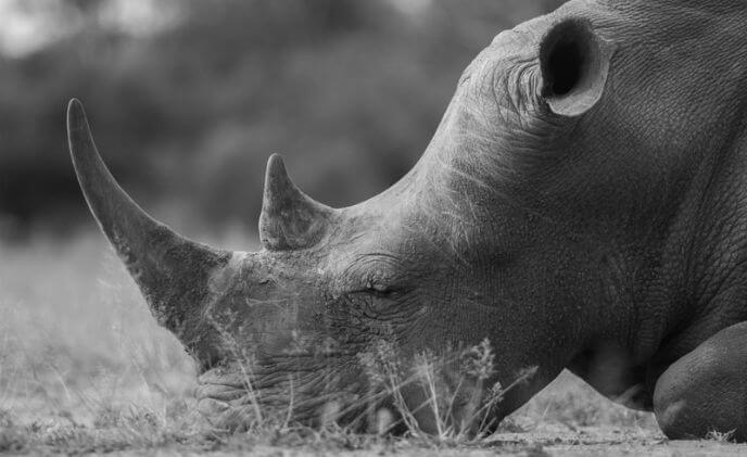 Technology developed by AxxonSoft to target poaching in Southern Africa