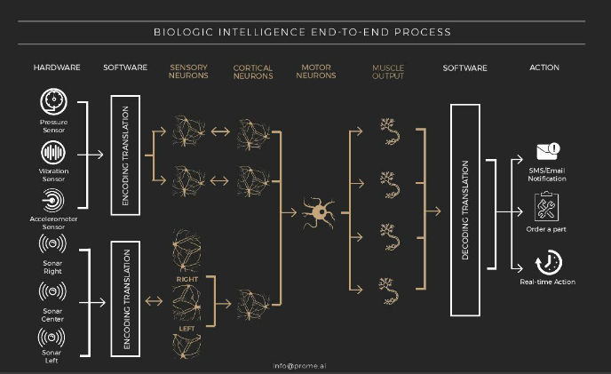 Step aside artificial intelligence, here's biologic intelligence!